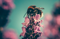 52. Keep a bee-friendly garden